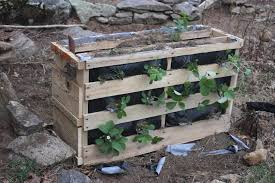 A Strawberry Pallet Planters Was Born Thumb IMG 1104 1024