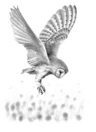 Barn Owl in Flight II Original Drawing tatoo ideas