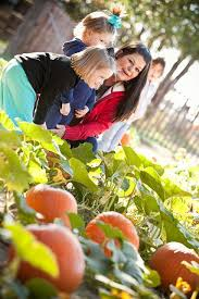 Pumpkin Patches In Okc by 15 Best Pumpkin Picking Oklahoma Agritourism Images On Pinterest