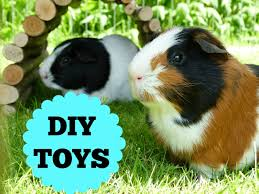 Can Guinea Pigs Eat Pumpkin Seeds by Jingle Balls Kaluah Loves To Grab Hold Of These And Shake Them