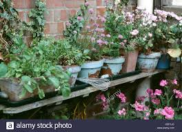 Rustic Painted Terracotta Plant Pots On A Wooden Shelf Against Bare Brick Wall Filled With Herbs And Lilac Pink Flowers