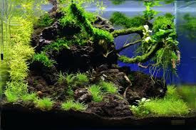 Aquascaping Forum Appartment Aquascaping Forum Led ... An Inrmediate Guide To Aquascaping Aquaec Tropical Fish Most Beautiful Aquascapes Undwater Landscapes Youtube 30 Most Amazing Aquascapes And Planted Fish Tank Ever 1 The Beautiful Luxury Aquaria Creating With Earth Water Photo Planted Axolotl Aquascape Tank Caudataorg 20 Of Places On Planet This Is Why You Can Forum Favourites By Very Nice Triangular Appartment Nano Cube Aquascape Nature Aquarium Aquascaping Enrico A Collection Of Kristelvdakker Pearltrees