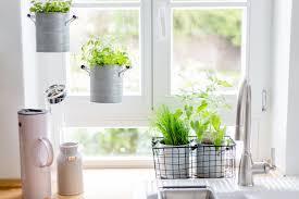 jungle in der küche oder frühlingsfrische kräuter