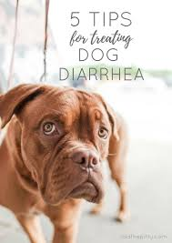 Dog Diarrhea Pumpkin by 5 Tips For Treating Dog Diarrhea Lola The Pitty