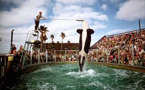 Virgin To Stop Selling Tickets To SeaWorld Best Pizza Coupons June 2019 Amazon Discount Code July Tips For Visiting Seaworld San Diego For Family Trips While Going To The Orlando Have Avis Promo Upgrade Azopt Card Mushybooks Payback Coupon Book App Online Codes Bath And Body Works Belk Seaworld Gold Coast Adventure Island Deals Can I Reuse K Cups Pelotoncycles Promo Codes 122