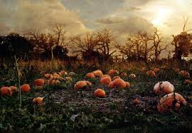 Schaake Pumpkin Patch by Image Gallery Pumpkin Patch