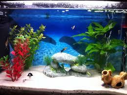 aquarium d eau douce mon aquarium d eau douce de 60 l