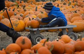 Southern Ohio Pumpkin Patches by Halloween Events Where To Find Haunted Houses Corn Mazes And