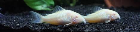 poissons choisir pour un petit aquarium de 60 80 l