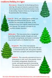 Christmas Trees Types by Types Of Fresh Christmas Trees Photo Albums Fabulous Homes