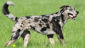 Low Shedding Dogs In India by 25 Most Affordable Low Cost Dog Breeds That Anyone Can Adopt