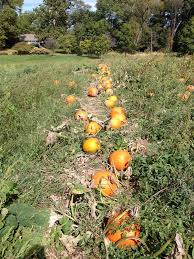 Southern Illinois Pumpkin Patches by 103 Best Illinois Nature Images On Pinterest Illinois Chicago