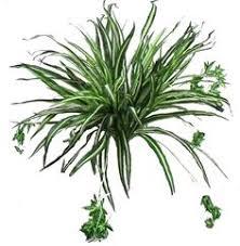 plante d駱olluante bureau plante dépolluante plantes de bureau