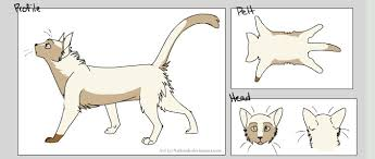 cat creator new warrior cat by senari haddock19 on deviantart