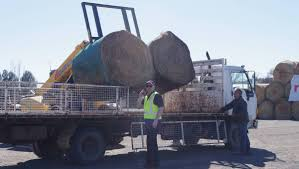 Rapid Relief Team Hay From Tasmania To Local Farmers   Goulburn Post Rapid Relief Team Hay From Tasmania To Local Farmers Goulburn Post Trucks Wagon Lorry Rig Tractors Hay Straw Photos Youtube Hay Trucks For Hire Willow Creek Ranch Hauling Bales Hi Res Video 85601 Elk161 4563 Morocco Tinerhir Trucks Loaded With Bales Of Stock Wa Convoy Delivers Muchneed Droughtstricken Nsw Convoy Heavily Transporting Over Shipping And Exporting Staheli West Long Haul As Demand Outstrips Supply The Northern Daily Leader Specialized Trailer On Wheels For Transportation Of Custom And Equipment Favorite Texas Trucking