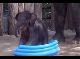 Baby Elephant Cools Off In Pool Youtube Within Kiddie