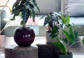 hängende zimmerpflanzen sauter grün erleben gmbh co kg