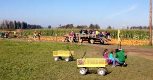 Kingsway Pumpkin Farm Hours by Pumpkin Patch U0026 Corn Maze Bella Organic Sauvie Island