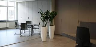 plante de bureau plantes d intérieur co bureau