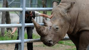 Rhino Gores Woman At Mogo Zoo | Yass Tribune Officials Large Trash Fire Breaks Out At Montgomery County Solid Food Trucks Ca Food Comas Pomona Fairgrounds Mogo Bbq Home Facebook The Worlds Newest Photos By Mogo Chef Flickr Hive Mind Mani Mogo Imokwon Part 1 Nov 05 2015 Youtube On Twitter Yum Lets Httpstcoqzhelbs0uy Best Bay Area Mogo Van Bristol Harbour Railway Blog Shortrib Burrito Milpitas 749 E Calaveras Blvd Here Till 10pm Truck Catering San Jose Roaming Hunger