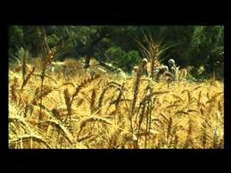 Threshing Floor Bible Meaning by The Wheat Harvest His Winnowing Fork Is In His Hand Youtube