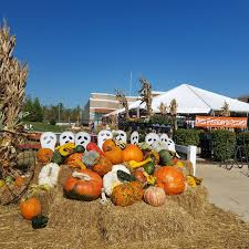 Live Oak Pumpkin Patch 2017 by Play St Louis Boone U0027s Crossing Farm Market Pumpkin Patch