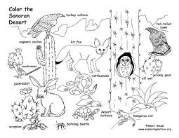 Desert Plant Coloring Pages Animal Book