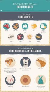 Pumpkin Rice For Dog Diarrhea by Homemade Healthy Dog Treats Fix Com