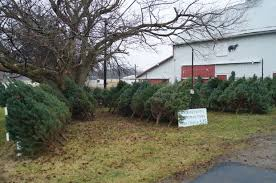 Plantable Christmas Trees Columbus Ohio by Watkins Farms Offers Christmas Trees For Over Two Decades