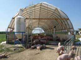 Livestock Shelters | Multi Shelter Solutions New Technologies Available For Cowcalf Producers Hoop Barns Protect Cattle From Heat Iowa Public Radio Chip Shot Cstruction Best 25 Pole Barn Cstruction Ideas On Pinterest Building Barn Consider Deep Pack Cow Comfort And Manure Management 13 Frugal Diy Greenhouse Plans Remodeling Expense Barndominium Prices Day 6 Orazi Feedlot Pork Producer 22 Greenhouses With Great Tutorials Diy Greenhouse