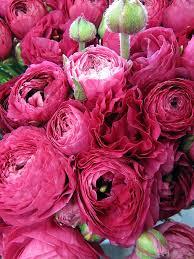 12 best Flowers from the San Francisco Wholesale Flower Market