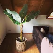 dagilp hab mir 2 pflanzen fürs wohnzimmer gekauft