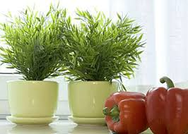 Kitchen Decorating With Edible Herbs Cooking Food
