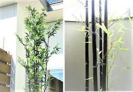 hit schwarzer bambus sichtschutz im garten und als