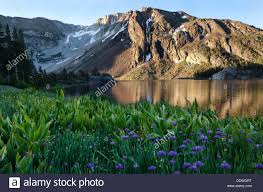 Snow Capped Mountains Reflected In The Still Lake Waters Of Ellery At Sunrise With Purple Flowers Wild Allium Fo