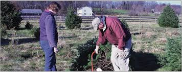 Christmas Tree Hill Shops York Pa by Finding The Perfect Christmas Tree Elizabethtown Advocate