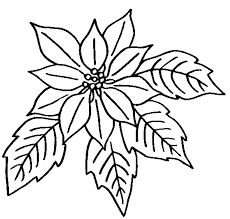 Free Flowers Coloring Pages Color In This Picture Of A Poinsettia Flower Or Euphorbia Pulcherrima And Others With Our Library Online