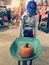 Pumpkin Farm In Maple Park Il by Fall Fun At Konow U0027s Corn Maze O The Places We Go