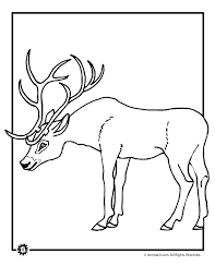 Buck With Antlers Coloring Page