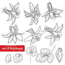 Ornamental Garden Plant Ukraine Art Black Color Vector Set With Outline Ornate Aquilegia