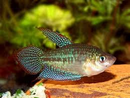 55 best tiny fish for tiny tanks images on nano