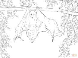 Bat Coloring Page Rodrigues Fruit Free Printable Pages To Print