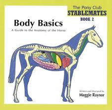 Veterinary Anatomy Coloring Book By Saunders