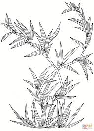Plant Coloring Pages Bamboo Page Free Printable Disney