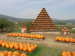 Pumpkin Patch Maryland by Orchard Farms In Frederick Md Shop Fruit U0026 Produce