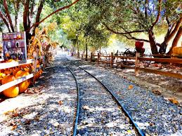 Irvine Railroad Pumpkin Patch by On The Go Oc Things To Do With Your Family October 2016