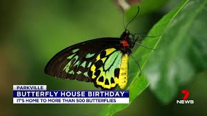 100 Butterfly House Melbourne The Latest News Breaking News Headlines Scoopnest