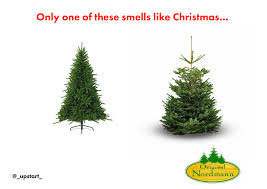 Nordmann Fir Christmas Tree Smell by Christmas Trees Get A Real One Upstart Creative