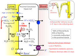 High Ceiling Diuretics Ppt by All Diuretics Tusom Pharmwiki