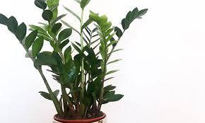 die 5 besten pflanzen für ein bad ohne fenster wenig licht